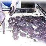 我国微波干燥设备_硫酸钴微波干燥机